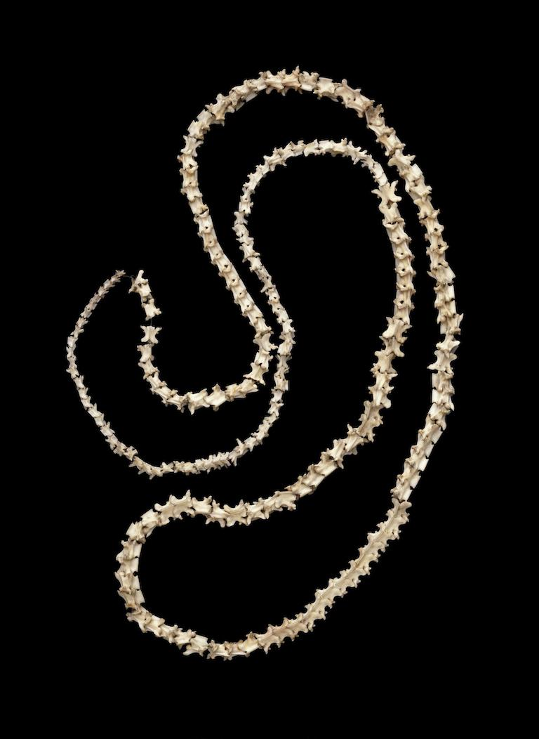 Early Indian necklace made with snake vertebrae. © Victoria and Albert Museum, London.